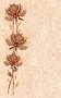 Каменный цветок Настенная плитка Каменный цветок декор